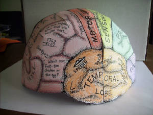 The Human Brain Anatomy and Function